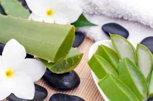 The-Aloe-Vera-Benefits-1.jpg